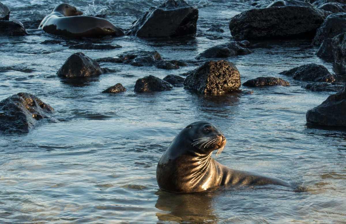 Ecuador_Galapagos_san Cristobal_sea lion