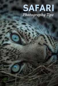 Tips for Africa Safari Photography