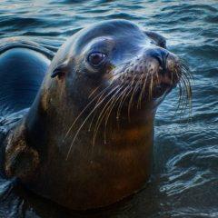 Land-Based Tourism Galapagos