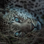 Tips for Capturing Great Wildlife Photography on an African Safari