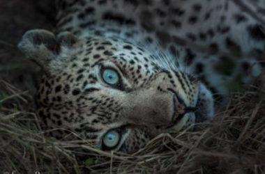 Photography Tips Africa Safari