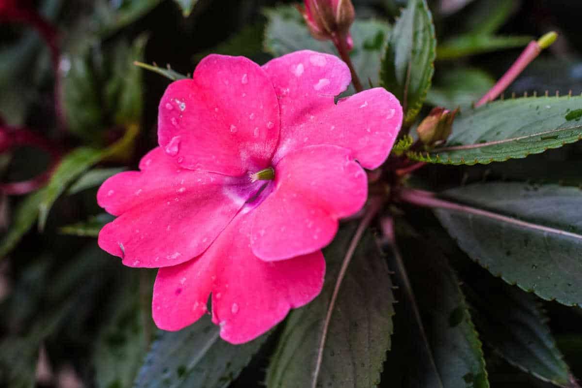 USA_Minnesota_Saint Paul macro flower 1