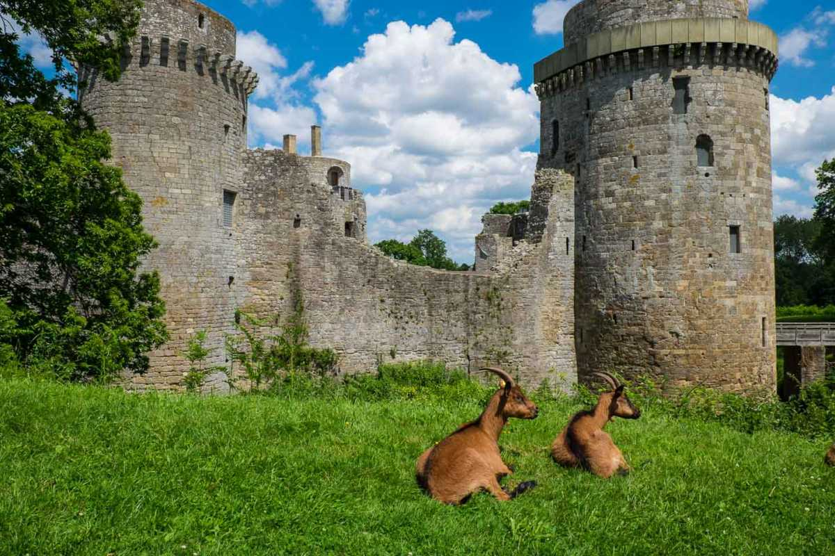 france_brittany_bike_castle goats