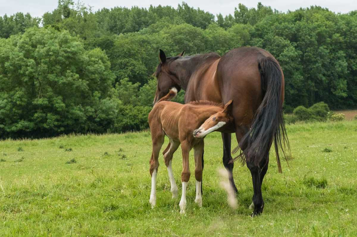 france_brittany_bike_mare and foal