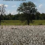 Mississippi Delta Road Trip