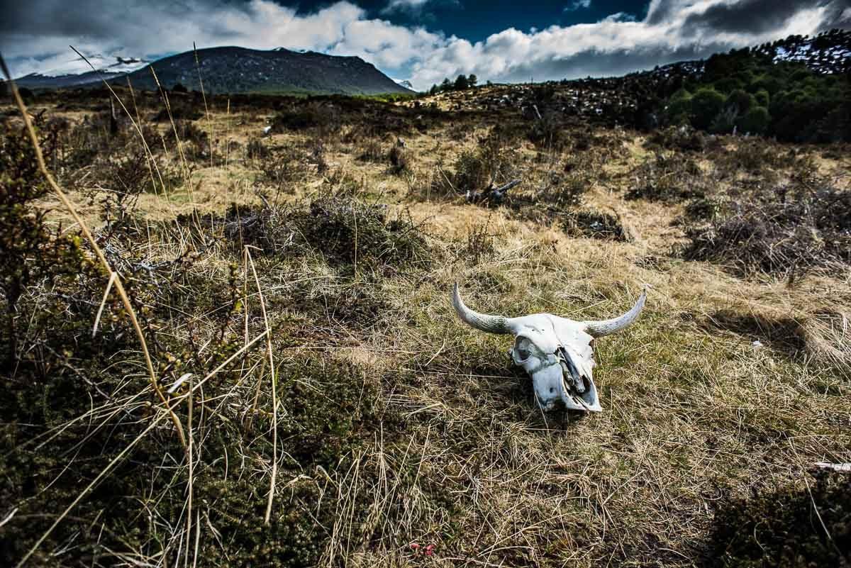 Argentina_Tierra del fuego harberton farm