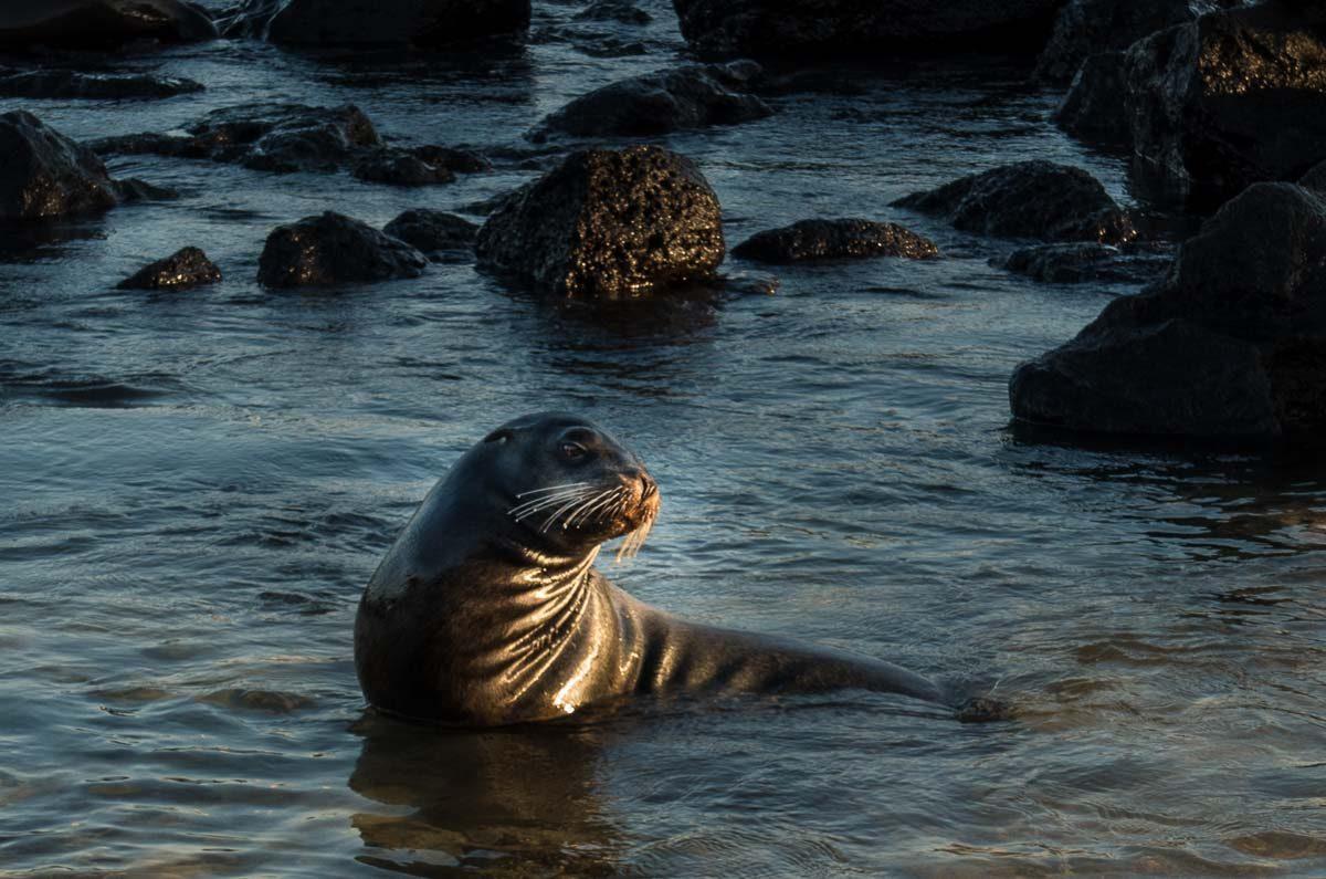 Ecuador_galapagos_san cristobal baby sea lion 2