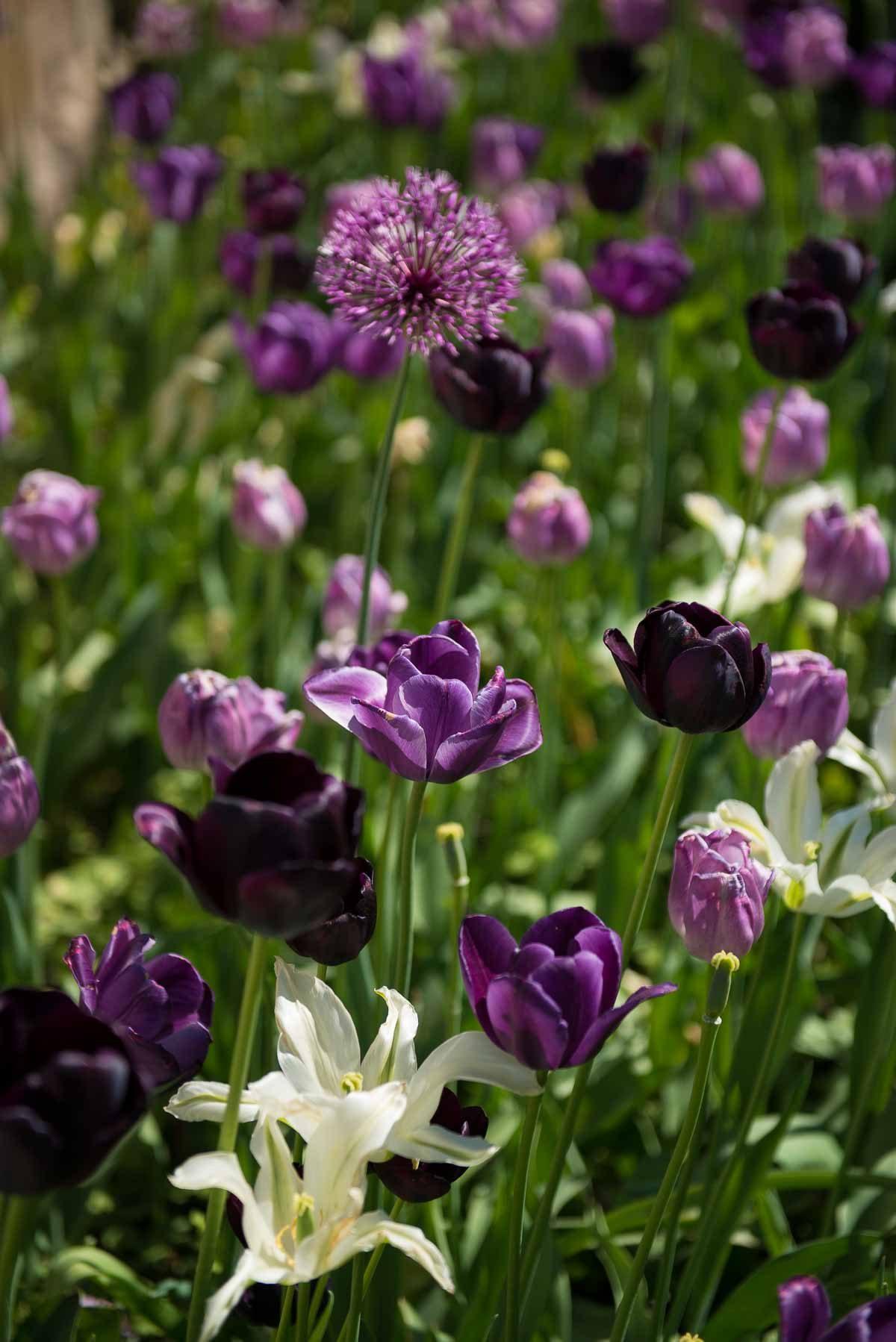 Sweden Drottningholm flowers