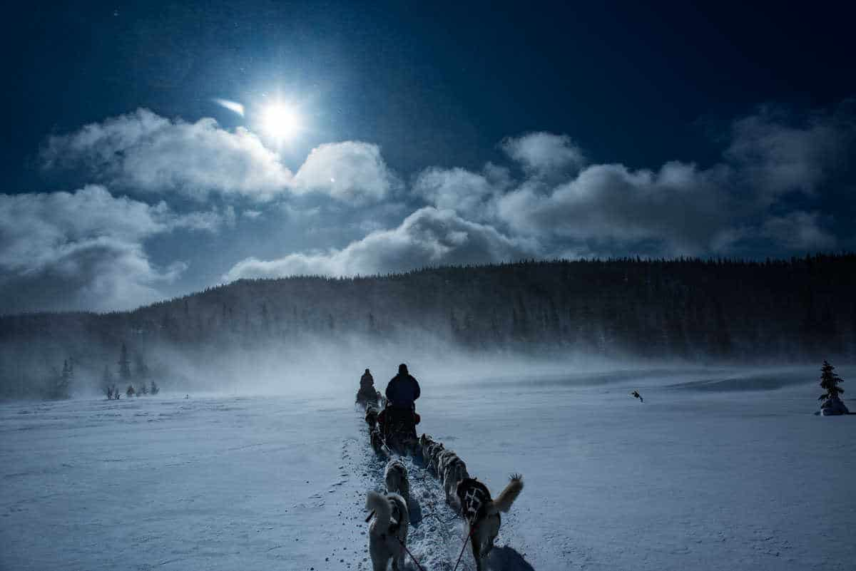 sweden are dogsledding 1