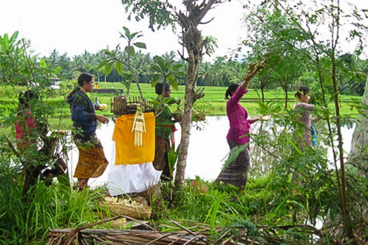 Bali Subak Rice Growing