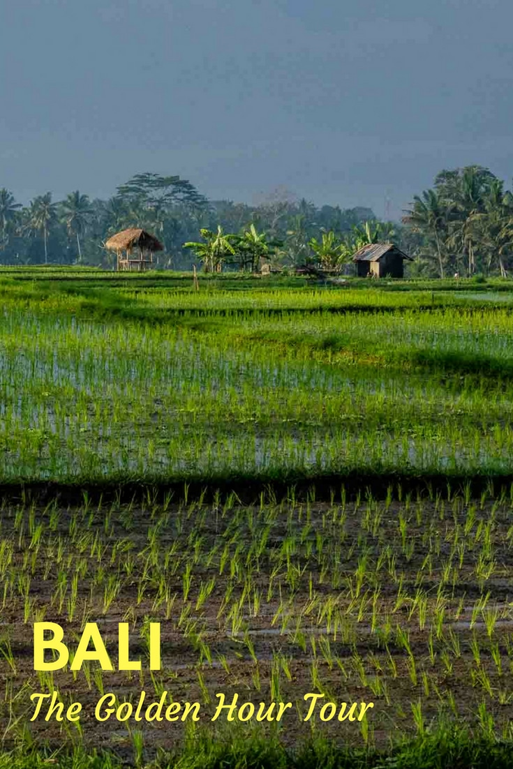 A quiet dawn tour of the Bali's countryside with Agung Rai based on simple observation. #Bali #Ubud #Indonesia #TravelPast50 #seniortravel #travelphotography #TBIN