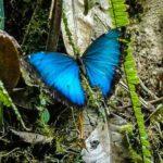 Mindo Cloud Forest Ecuador NoTXT