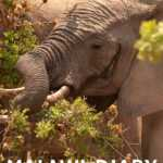 Malawi Wildlife expedition