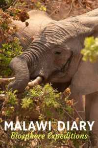 Malawi Wildlife expedition