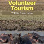 volunteer wildlife Malawi Africa