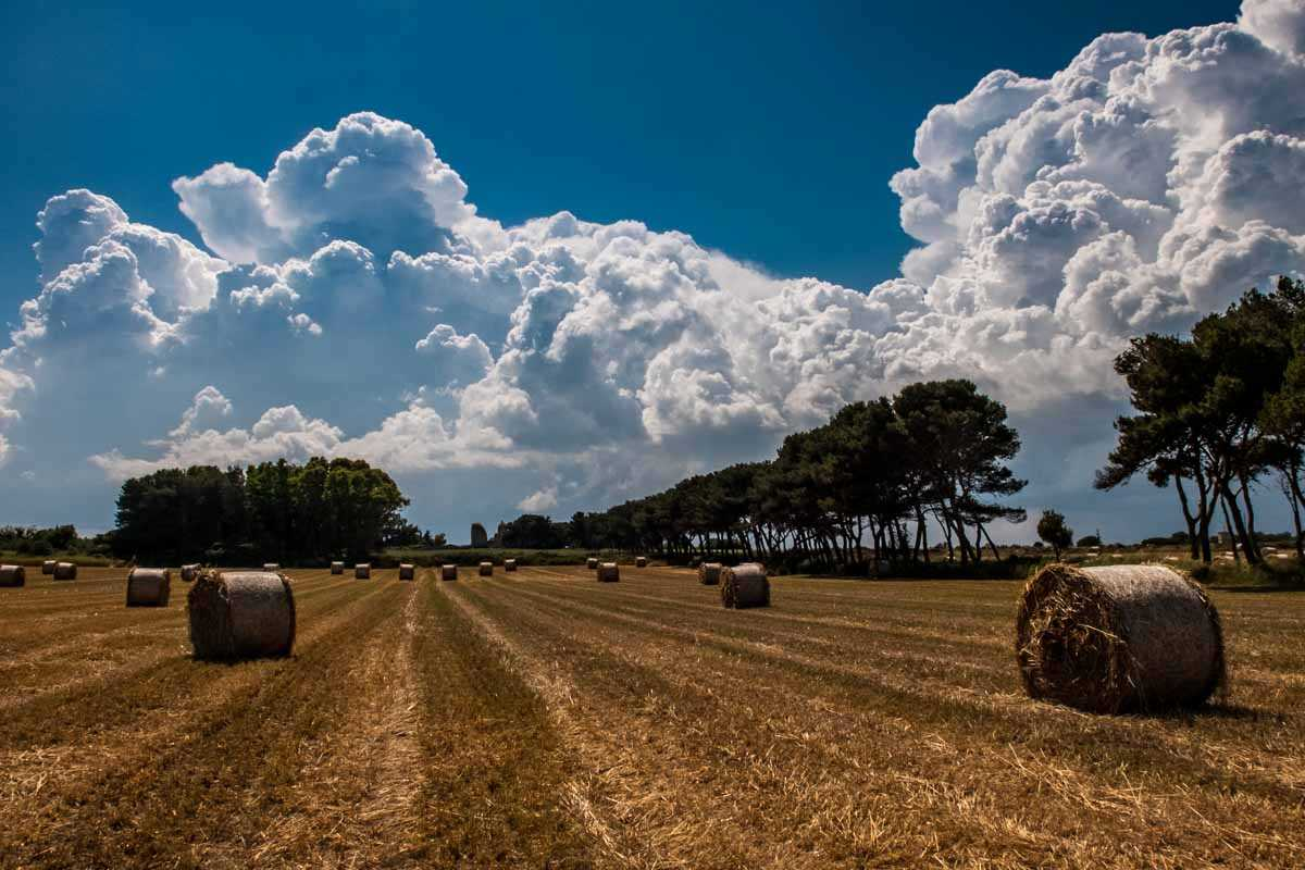 field near otranto italy