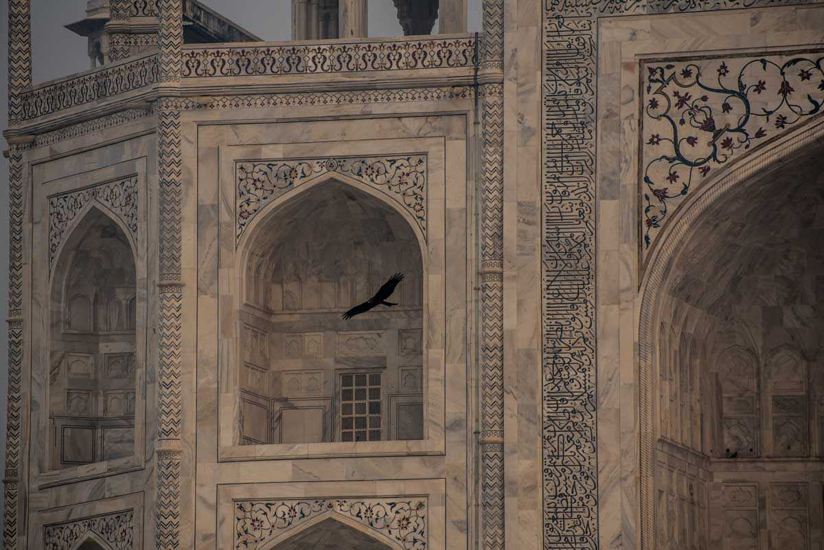 india photographing taj mahal bird