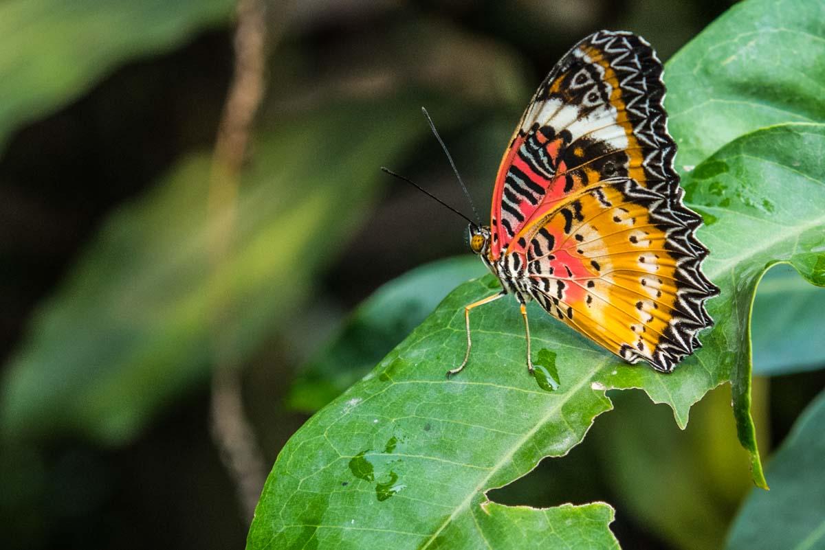 Butterfly Center Siem Reap Cambodia