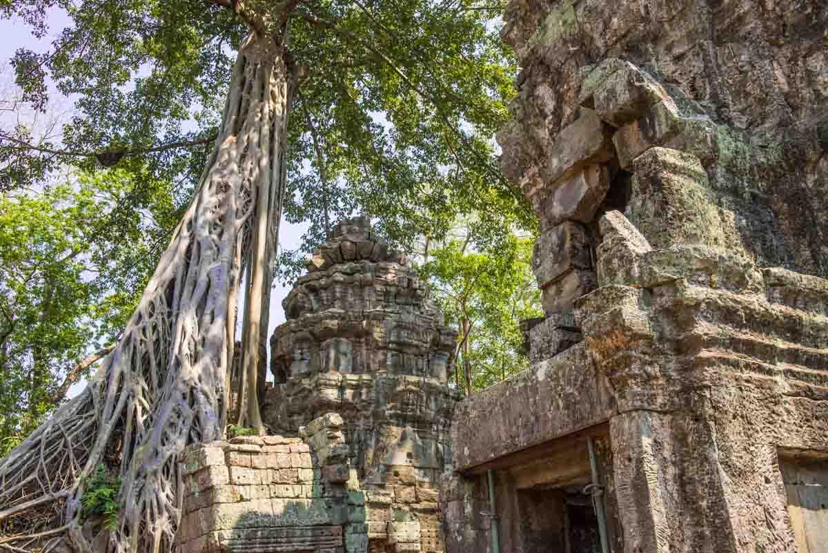 Ta Prohm Siem Reap Angkor Wat Cambodia