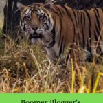 Boomer blogger bucket list 2020 safari