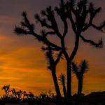 Desert Sunset Joshua