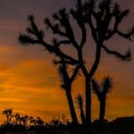 Desert Sunsets Joshua Tree National Park