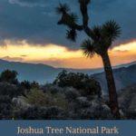Joshua Tree Desert Sunset blue